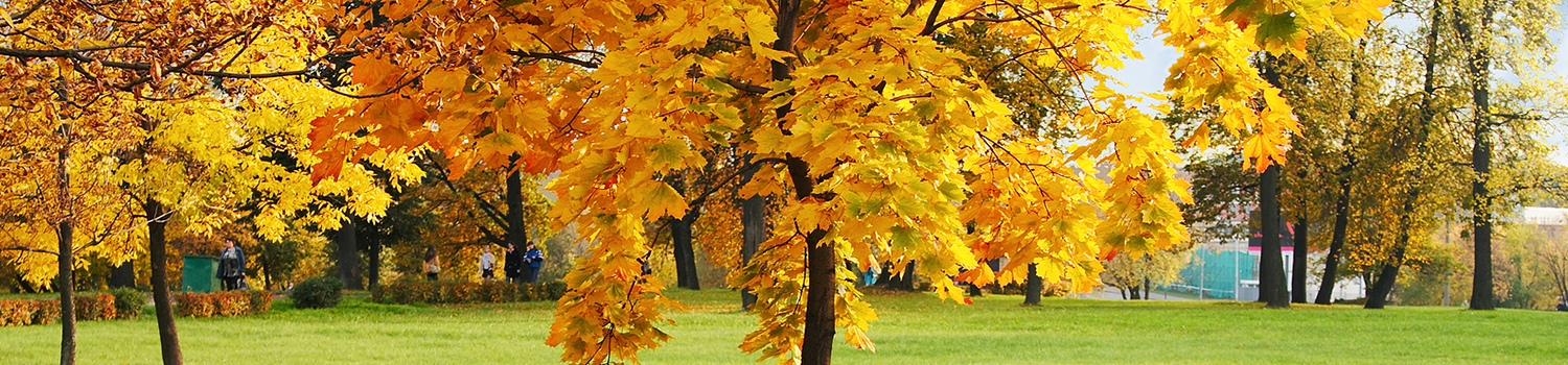 Scott Township fall leaf and branch pick up schedule